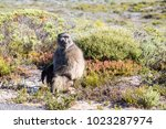 baboon at cape of good hope ... | Shutterstock . vector #1023287974