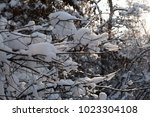 branches under snow | Shutterstock . vector #1023304108