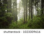 wilderness landscape with green ... | Shutterstock . vector #1023309616