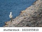 little egret  egretta garzetta ....   Shutterstock . vector #1023355810
