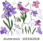 isolated orchid vanda on white. ... | Shutterstock .eps vector #1023362818