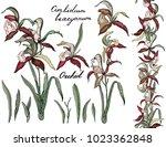 isolated orchid cimbidium on...