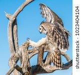 avian raptors in tucson arizona   Shutterstock . vector #1023404104