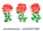 handpainted watercolor... | Shutterstock . vector #1023407284