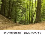 dirt trail in the woods | Shutterstock . vector #1023409759
