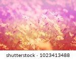 field of flowers in the garden...   Shutterstock . vector #1023413488
