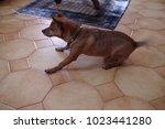 dog in a running position ... | Shutterstock . vector #1023441280