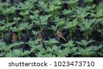 young plants and birds in... | Shutterstock . vector #1023473710