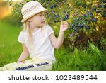 cute little girl picking fresh... | Shutterstock . vector #1023489544