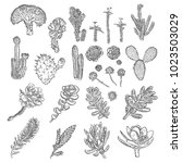 cactus set. hand drawn plants.... | Shutterstock .eps vector #1023503029