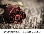 Closeup Dried Red Rose  Dead...