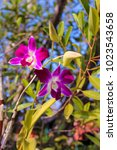 beautiful orchid in the nature | Shutterstock . vector #1023543658