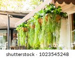 hanging plant in pot decoration ... | Shutterstock . vector #1023545248