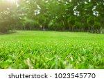close up green grass field with ... | Shutterstock . vector #1023545770