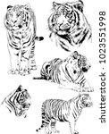 vector drawings sketches... | Shutterstock .eps vector #1023551998