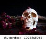 selective focus image of human... | Shutterstock . vector #1023565066