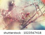 flowers of the cherry... | Shutterstock . vector #1023567418