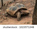 galapagos giant tortoise ... | Shutterstock . vector #1023571348