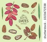 collection of date fruit ... | Shutterstock .eps vector #1023672538