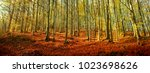 beautiful forest scenic... | Shutterstock . vector #1023698626