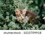 lonely little kitten hiding in...   Shutterstock . vector #1023709918