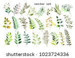 botanical collection. herbs ... | Shutterstock .eps vector #1023724336