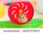 Stock photo hamster in a wheel isolated 1023727873