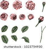 set of pink roses. retro vector ... | Shutterstock .eps vector #1023754930
