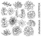 succulent flowers line art... | Shutterstock .eps vector #1023799924