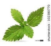 green mint leaves on a white...   Shutterstock .eps vector #102380770