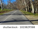 road in the forest | Shutterstock . vector #1023829588