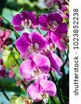 beautiful pink orchid flower... | Shutterstock . vector #1023852238