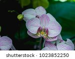 beautiful pink orchid flower... | Shutterstock . vector #1023852250