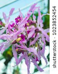 beautiful pink orchid flower... | Shutterstock . vector #1023852454