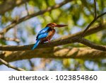 Kingfisher Resting On A Branch...