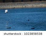 little egret  egretta garzetta  ...   Shutterstock . vector #1023858538
