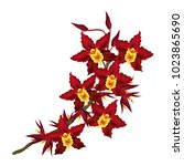 dark red cambria orchid flowers.... | Shutterstock .eps vector #1023865690