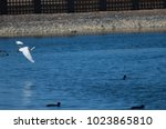 little egret  egretta garzetta  ...   Shutterstock . vector #1023865810