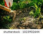 gardening  weeding weeds.... | Shutterstock . vector #1023902644