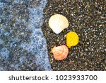 seashells and starfish on the... | Shutterstock . vector #1023933700