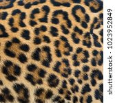 leopard fur texture  real fur      Shutterstock . vector #1023952849