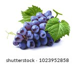 blue grapes bunch isolated on...   Shutterstock . vector #1023952858