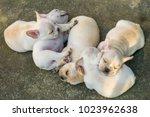 cute little french bulldog... | Shutterstock . vector #1023962638