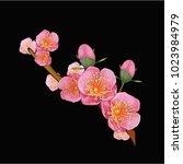 flowers. vector illustration | Shutterstock .eps vector #1023984979