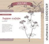 fagopyrum esculentum aka... | Shutterstock .eps vector #1024001569