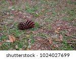 huge brown pine cone on the...   Shutterstock . vector #1024027699