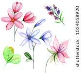 delicate wild flowers in... | Shutterstock . vector #1024058920