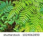 Vibrant Green Fern Leaf Digita...