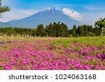 shibazakura flower field with... | Shutterstock . vector #1024063168