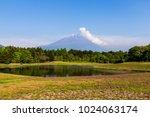 shibazakura flower field with... | Shutterstock . vector #1024063174